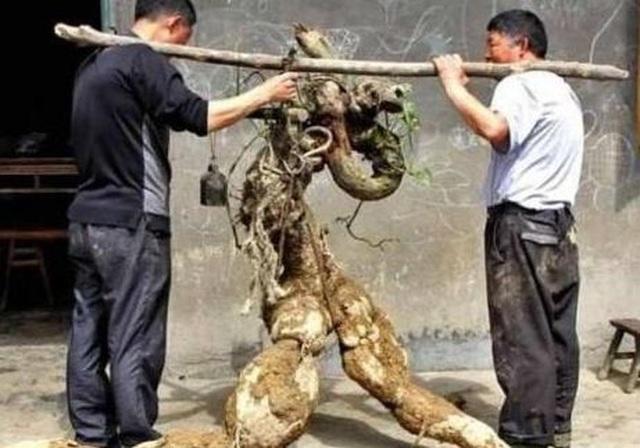 Tình cờ đào được rễ cây hình người, bán hơn trăm triệu tưởng lãi, hóa ra vẫn lỗ - 2