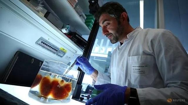 Các nhà khoa học Đức tìm ra cách biến nội tạng người trở nên trong suốt! - 1