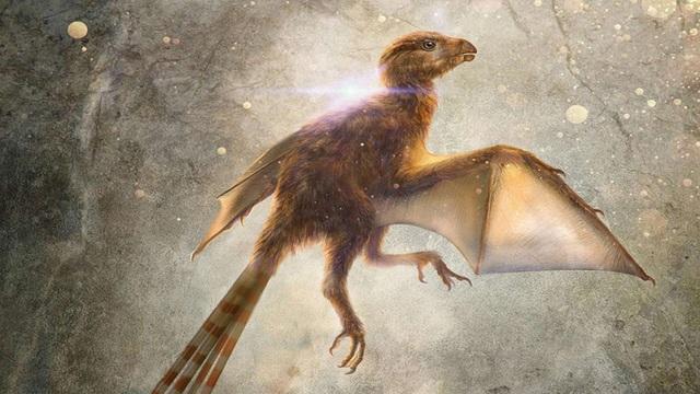 Loài khủng long tí hon với đôi cánh giống như loài dơi hiện đại - 1