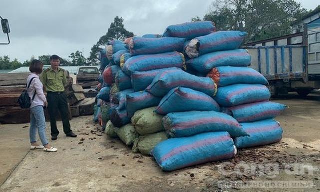 Thương lái Trung Quốc mua vỏ thông số lượng lớn ở Gia Lai - 1