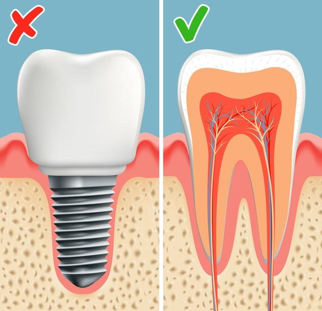 Công nghệ khiến răng tự mọc lại sau khi rụng: Sẽ không còn ai phải trồng răng! - 5