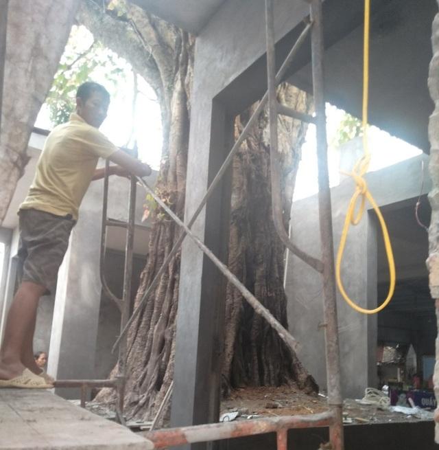 Chủ tịch tỉnh chỉ đạo kiểm tra việc cây bồ đề hàng trăm tuổi bị xâm hại - 2