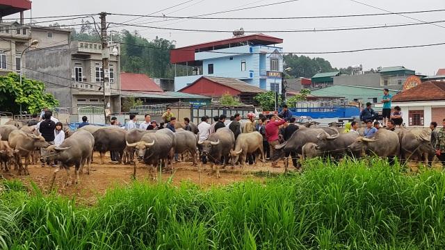 Độc đáo phiên chợ trâu lớn nhất vùng Tây Bắc - 2