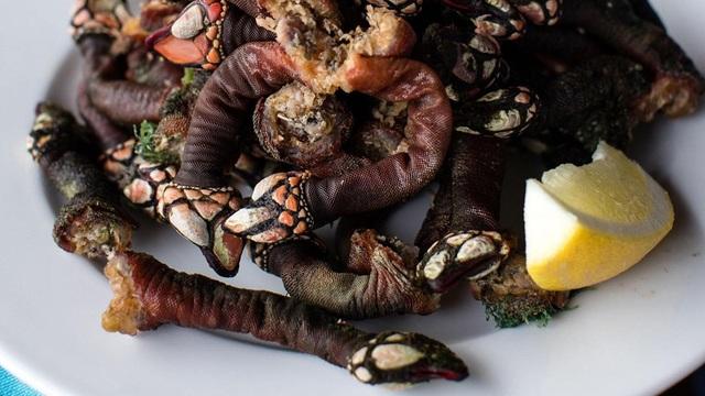 Loại ốc biển xấu xí 3 triệu đồng/con, nhà giàu muốn mua không có - 1