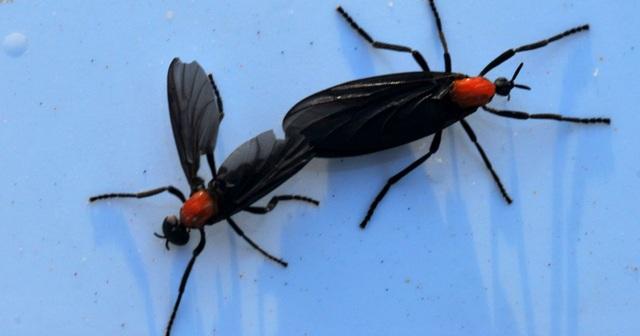 """Cảnh tượng như tận thế ở Mỹ khi hàng triệu con bọ """"xâm chiếm"""" thành phố! - 2"""