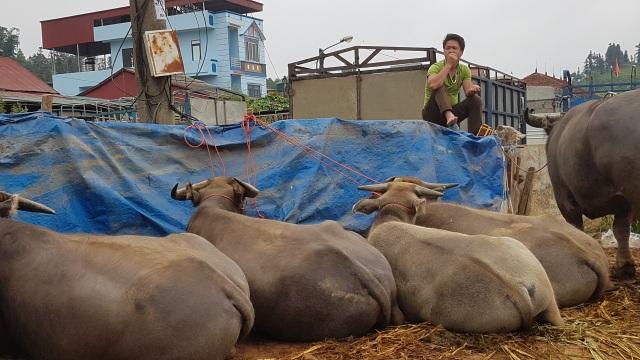 Độc đáo phiên chợ trâu lớn nhất vùng Tây Bắc - 20