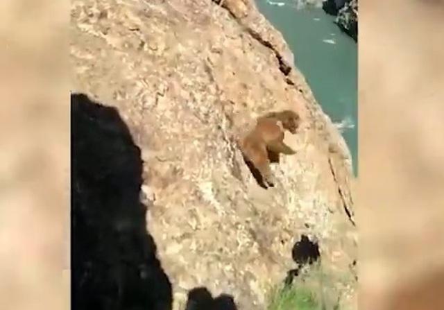 Đáng thương khoảnh khắc gấu con ngã xuống vách đá khi bị con người truy đuổi - 1