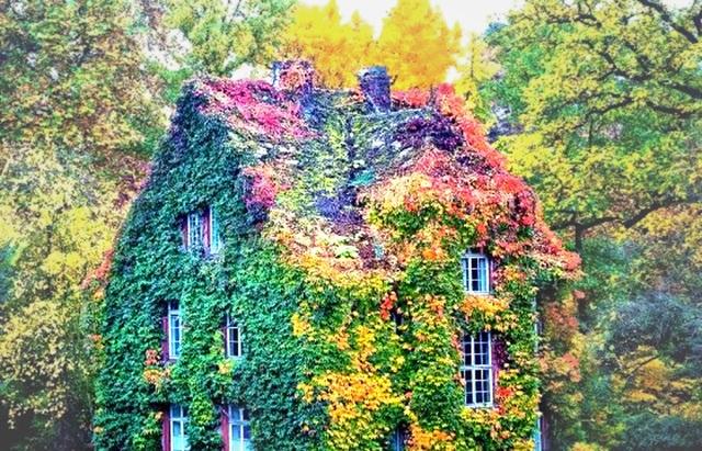 """Khi những ngôi nhà bình thường bỗng hóa """"tiên cảnh"""" nhờ cây xanh - 1"""