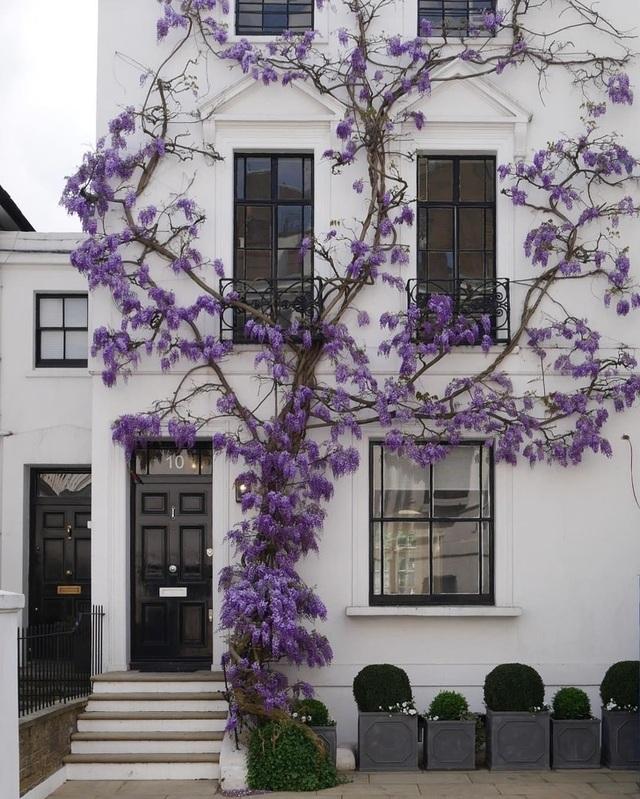 """Khi những ngôi nhà bình thường bỗng hóa """"tiên cảnh"""" nhờ cây xanh - 5"""