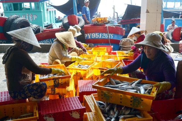 Phú Yên: Ngư dân trúng đậm cá nục, cá ồ thu lãi hàng trăm triệu đồng - 1