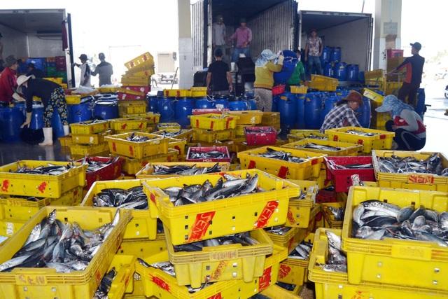 Phú Yên: Ngư dân trúng đậm cá nục, cá ồ thu lãi hàng trăm triệu đồng - 3