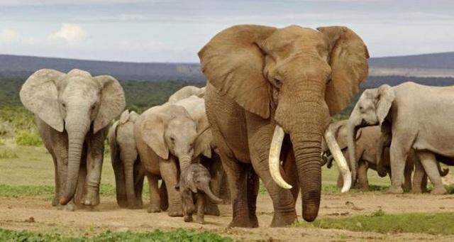 Zimbabwe kiếm gần 3 triệu USD nhờ bán voi cho Trung Quốc, Dubai - 1