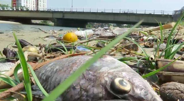 Chủ tịch Đà Nẵng: Nếu không khẩn trương xử lý, thành phố sẽ... ngập rác! - 2