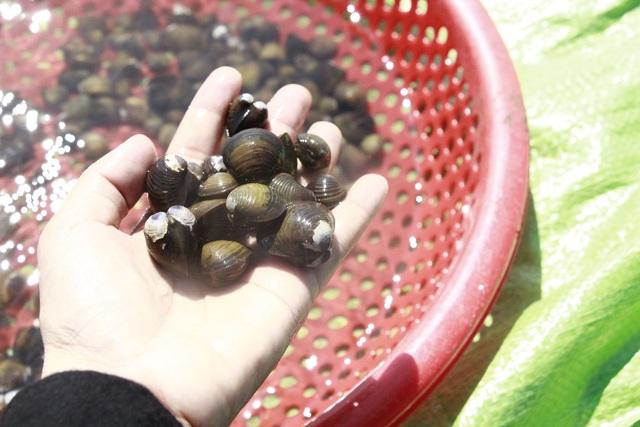 Đổ xô đi đãi hến mùa nước cạn ở hồ Ea Kao - 6