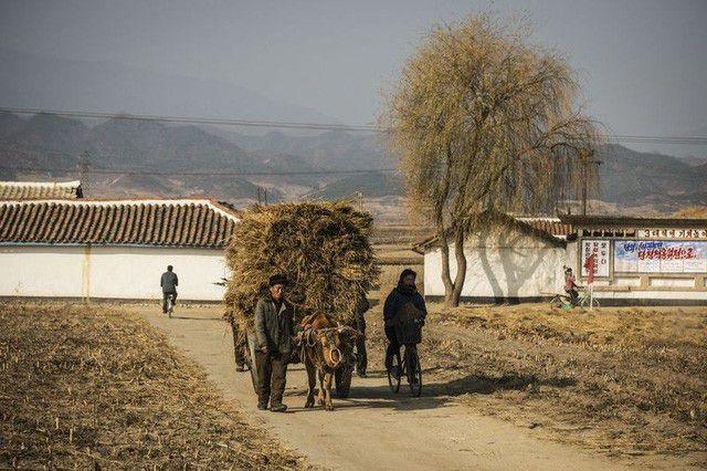 Triều Tiên thừa nhận hạn hán kỷ lục, đối mặt nguy cơ thiếu lương thực - 1