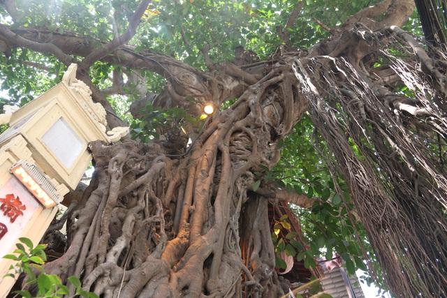 """Cây đa cổ thụ với bộ rễ """"khổng lồ"""" có tuổi đời hàng trăm năm ở Đình Cổ Vũ  - 8"""