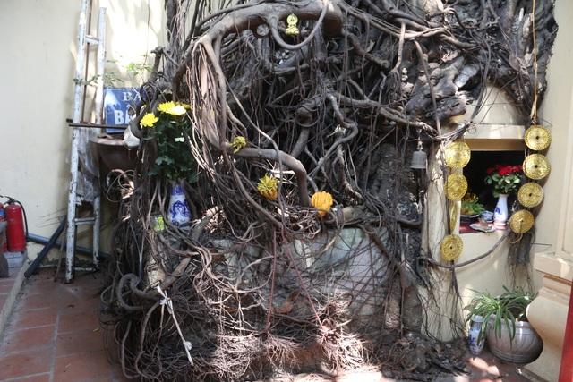 """Cây đa cổ thụ với bộ rễ """"khổng lồ"""" có tuổi đời hàng trăm năm ở Đình Cổ Vũ  - 6"""