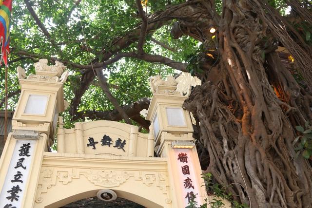 """Cây đa cổ thụ với bộ rễ """"khổng lồ"""" có tuổi đời hàng trăm năm ở Đình Cổ Vũ  - 2"""