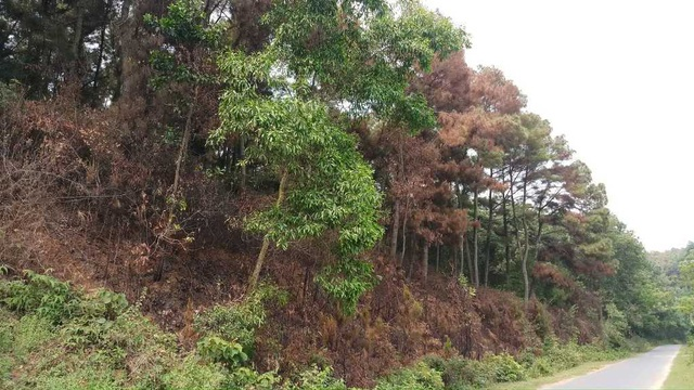 Tiền hỗ trợ bảo vệ rừng bị xén không lý do - 2
