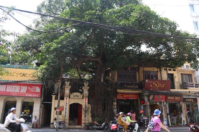 """Cây đa cổ thụ với bộ rễ """"khổng lồ"""" có tuổi đời hàng trăm năm ở Đình Cổ Vũ  - 1"""