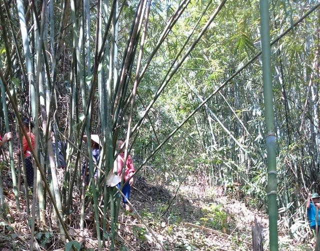 Tiền hỗ trợ bảo vệ rừng bị xén không lý do - 1