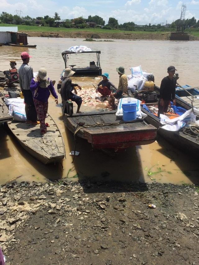 Cá nuôi trên sông La Ngà chết trắng sau trận mưa lớn - 1