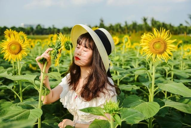 """""""Phát sốt"""" với cánh đồng hoa hướng dương đẹp ngất ngây ngay gần Hà Nội - 11"""