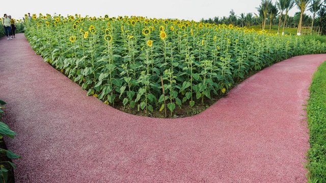 """""""Phát sốt"""" với cánh đồng hoa hướng dương đẹp ngất ngây ngay gần Hà Nội - 17"""