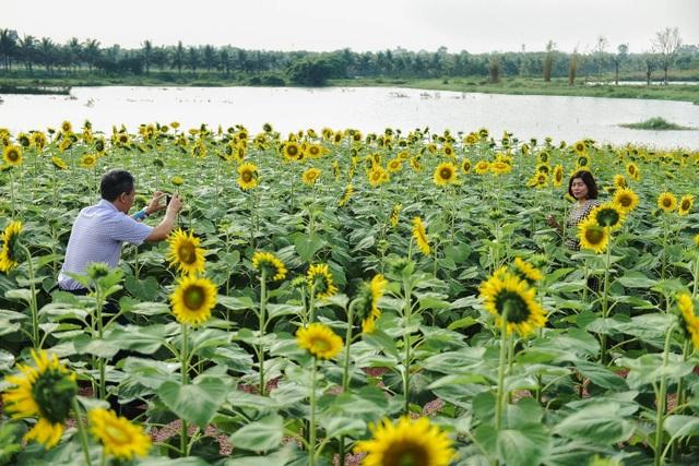 """""""Phát sốt"""" với cánh đồng hoa hướng dương đẹp ngất ngây ngay gần Hà Nội - 14"""