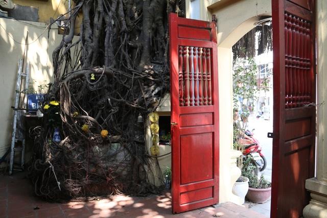 """Cây đa cổ thụ với bộ rễ """"khổng lồ"""" có tuổi đời hàng trăm năm ở Đình Cổ Vũ  - 10"""