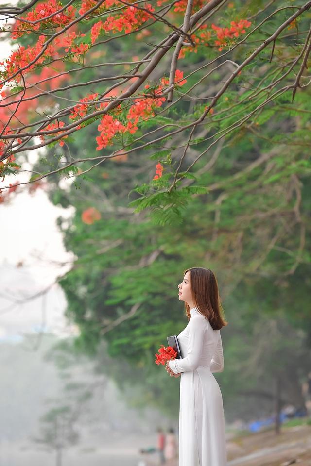 Thiếu nữ bâng khuâng kỷ niệm dưới tán phượng đỏ rực ven hồ - 10