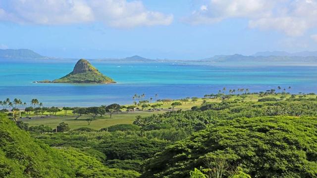 Các nhà khoa học khám phá ra siêu san hô tự phục hồi ở Hawaii - 1