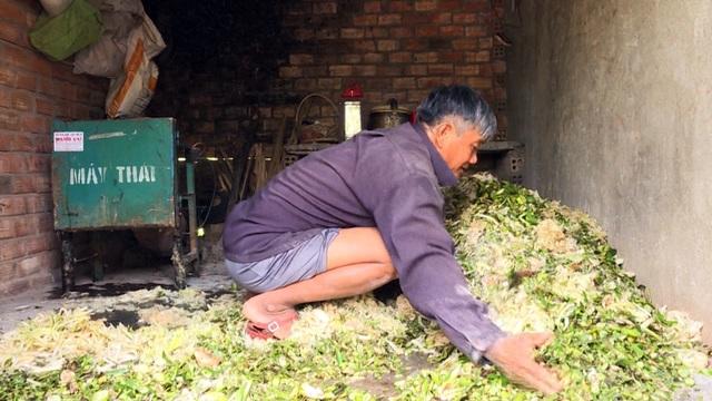 Phú Yên: Nông dân nuôi heo rừng lai kiếm hàng trăm triệu đồng mỗi năm - 2