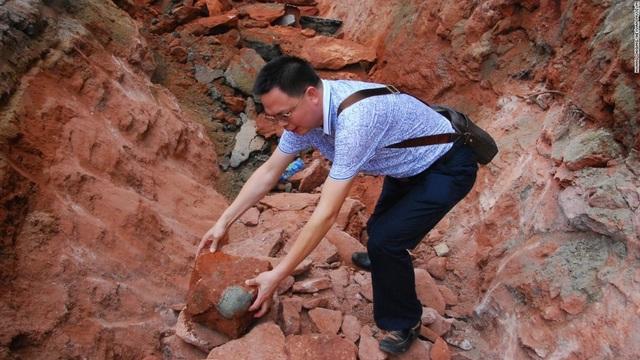 Nhặt được đá lạ hóa ra là trứng khủng long 66 triệu năm tuổi - 3