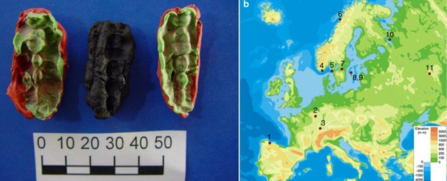 """""""Kẹo cao su cổ đại"""" lưu giữ DNA của loài người từ 10.000 năm trước - 1"""