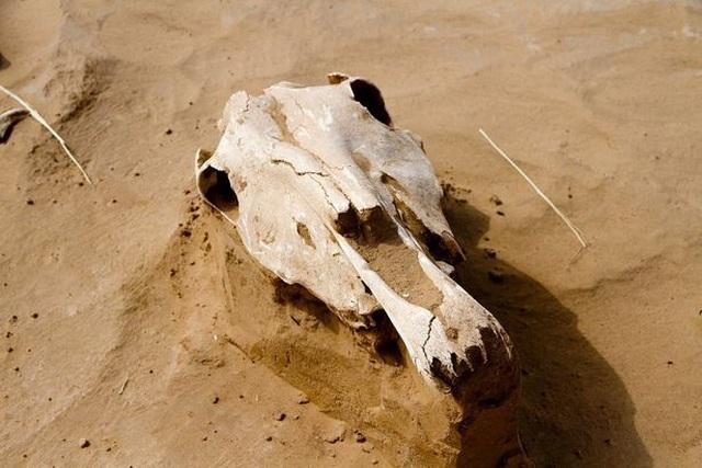 Phát hiện hài cốt 2.500 tuổi chôn cùng trang sức vàng và đầu ngựa - 3