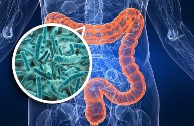 Vi khuẩn đường ruột và sức khỏe con người - 1