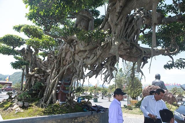 Cây sanh khủng nhất Việt Nam chưa hoàn thiện đã có giá triệu đô - 9