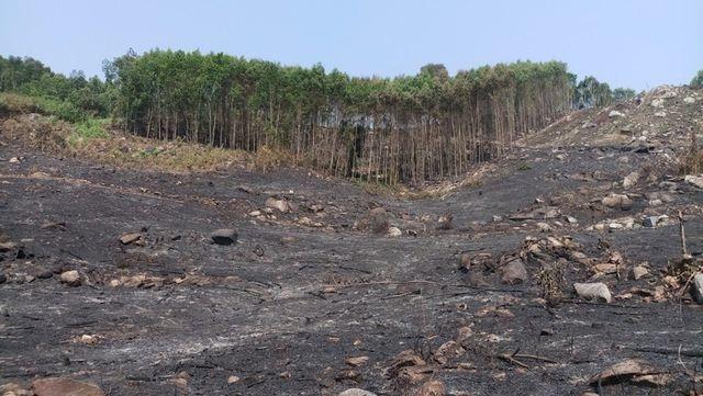Phát hiện 1 người tử vong trong đám cháy rừng - 1
