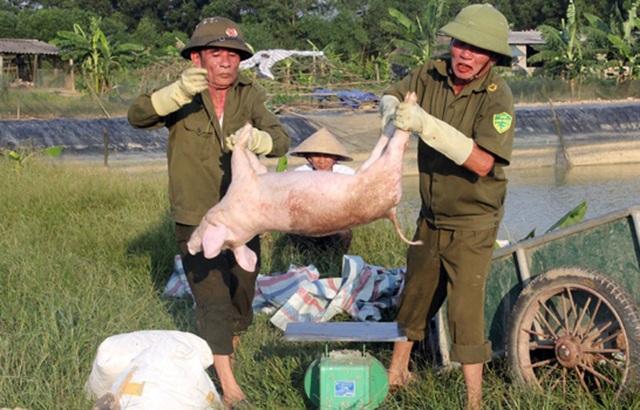 Căng mình giữa nắng nóng ngăn dịch tả lợn châu Phi lây lan - 1