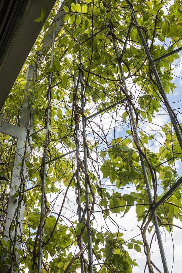 """""""Trốn"""" nóng trong ngôi nhà phủ kín cây xanh ở Sài Gòn - 3"""