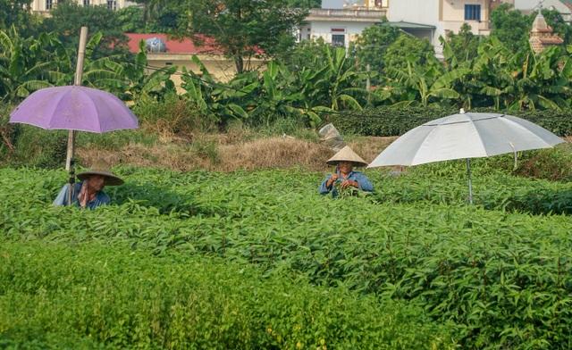 Nông dân vác bảo bối ra đồng để chống chọi nắng nóng 40 độ C - 7