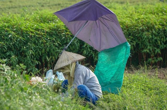 Nông dân vác bảo bối ra đồng để chống chọi nắng nóng 40 độ C - 11