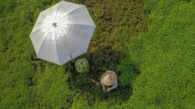 Nông dân vác bảo bối ra đồng để chống chọi nắng nóng 40 độ C - 2