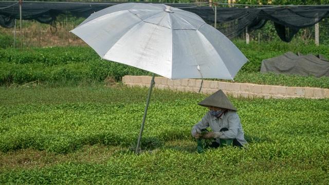 Nông dân vác bảo bối ra đồng để chống chọi nắng nóng 40 độ C - 3