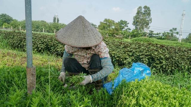 Nông dân vác bảo bối ra đồng để chống chọi nắng nóng 40 độ C - 4