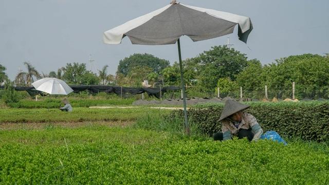 Nông dân vác bảo bối ra đồng để chống chọi nắng nóng 40 độ C - 14
