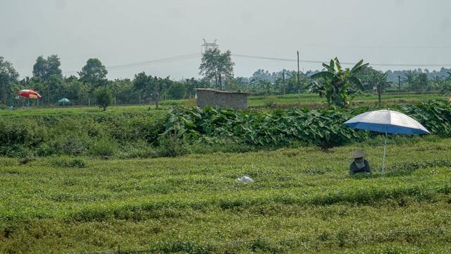 Nông dân vác bảo bối ra đồng để chống chọi nắng nóng 40 độ C - 8