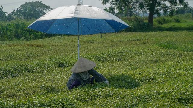 Nông dân vác bảo bối ra đồng để chống chọi nắng nóng 40 độ C - 15