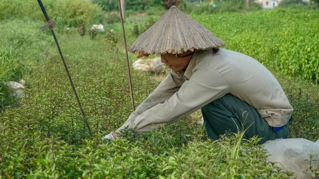 Nông dân vác bảo bối ra đồng để chống chọi nắng nóng 40 độ C - 10